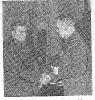 Парфенов Пав Федор ц5 слева ТС66-13