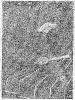 Сирнова  ц 7 ТС66-4